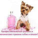 Груминг - профессиональный уход и гигиенические стрижки собак и кошек